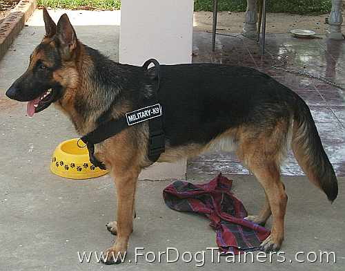 *Buster German Shepherd wearing Better control everyday all weather dog harness - H17 - Click Image to Close