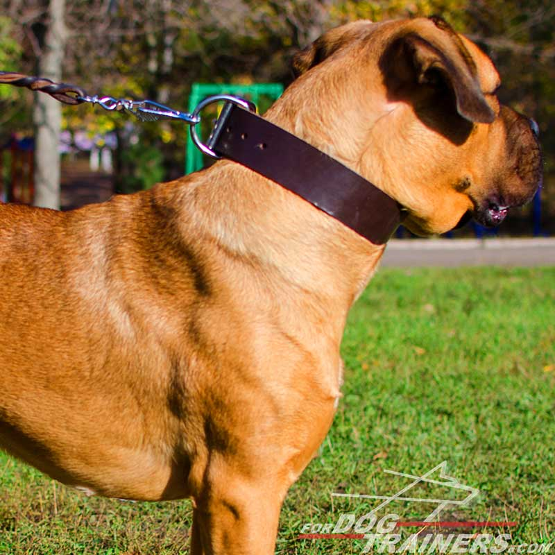 Wide Walking Leather Cane Corso Collar - Click Image to Close