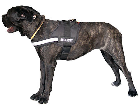 Nylon Dog Harness for Cane Corso - Small, Medium, Large Harness