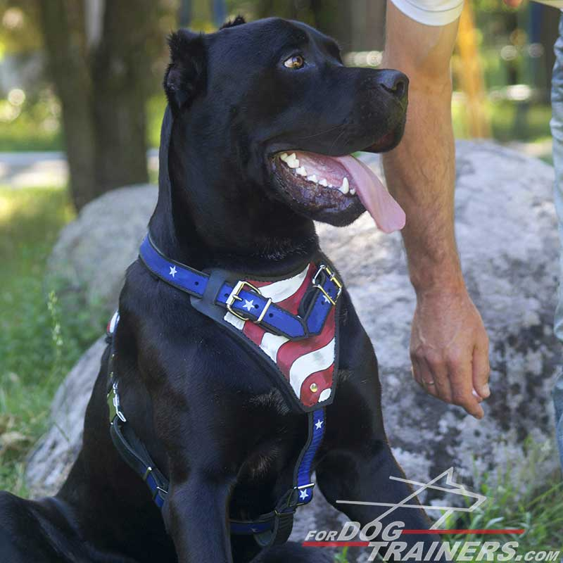 Handpainted Adjustable Leather Cane Corso Harness for Attack Training and  Walking