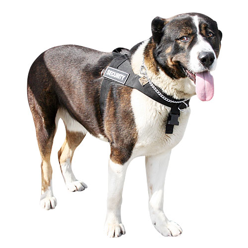 Everyday all weather dog harness for Caucasian Shepherd - Click Image to Close