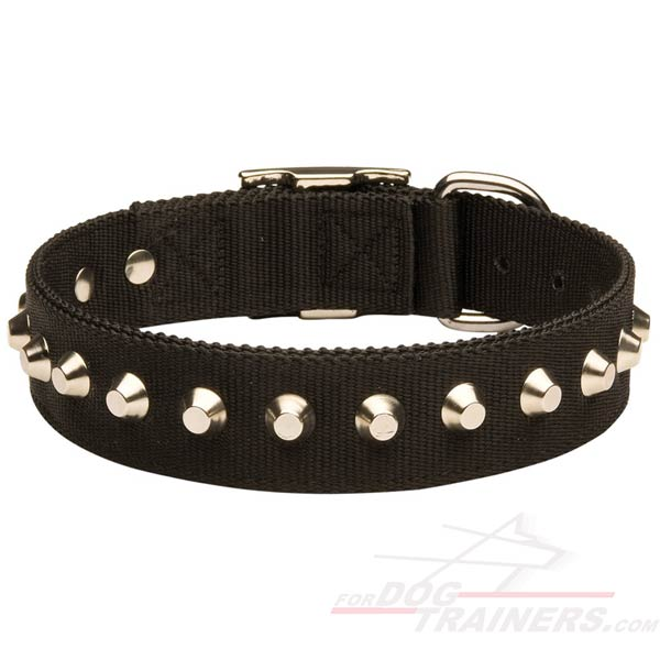 Best Nylon Dog Collar