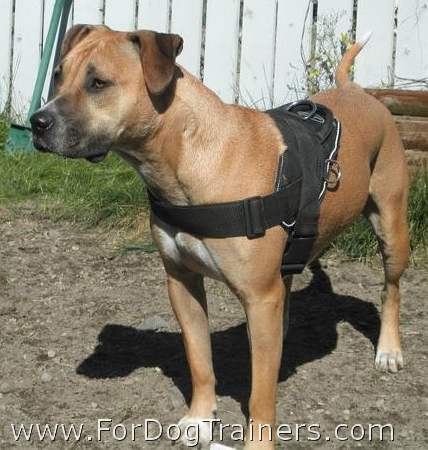 copper looking so good with our all weather outdoor harness on