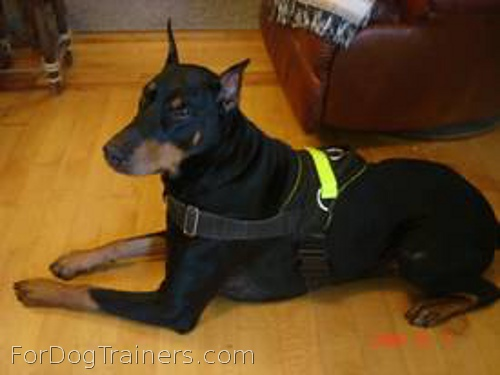 Astonishing look of Sergio in All Weather Reflective harness