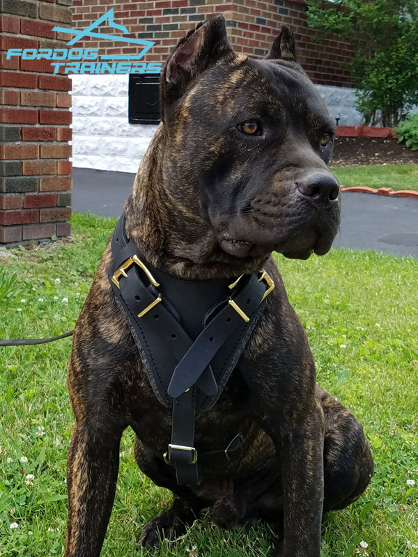 Leather Dog Harness - Best Gear for Daily Use - Click Image to Close