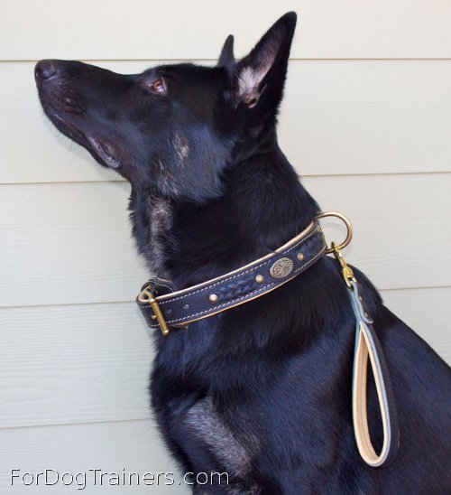 Short leather dog leash - L8 suits Alois