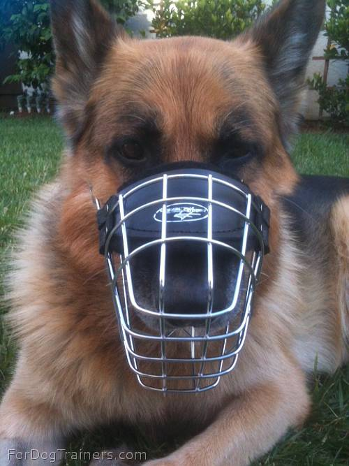 German Shepherd looking Fancy in his new Revolution Design Wire Dog Muzzle - M9 - Click Image to Close