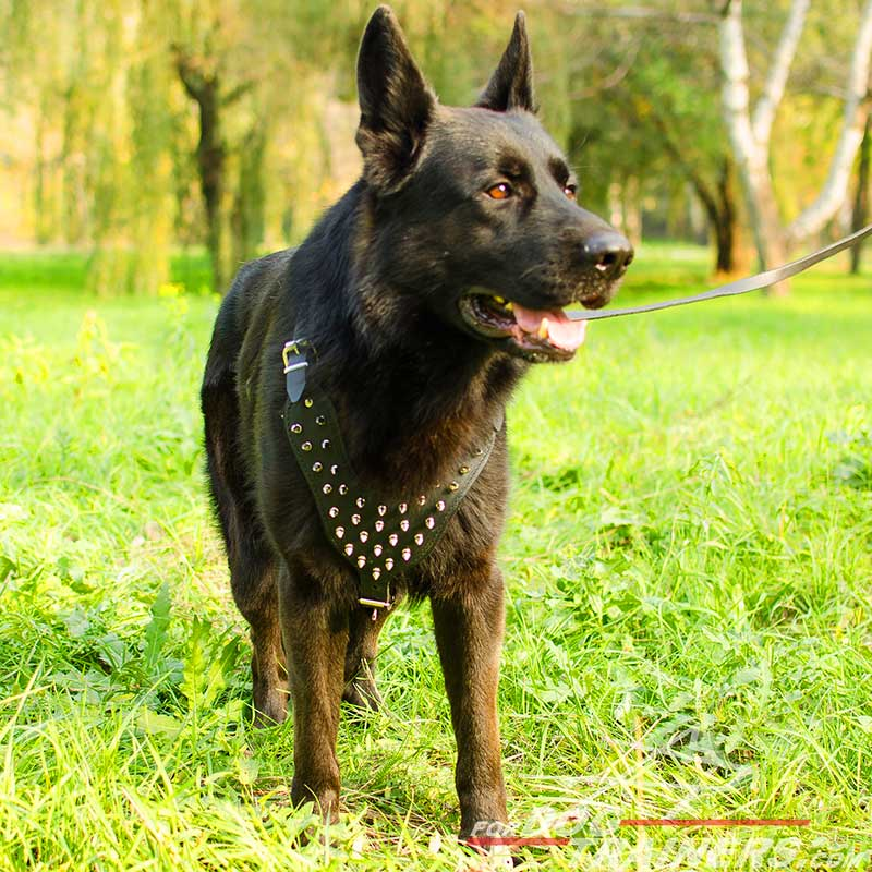German Shepherd Spiked Dog Harness - Deluxe Best Dog Harness - Click Image to Close