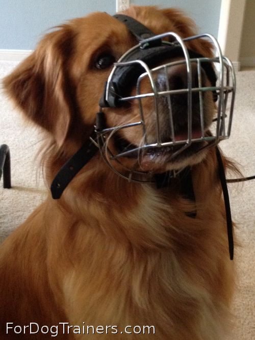 Miller looks fantastic in new basket muzzle