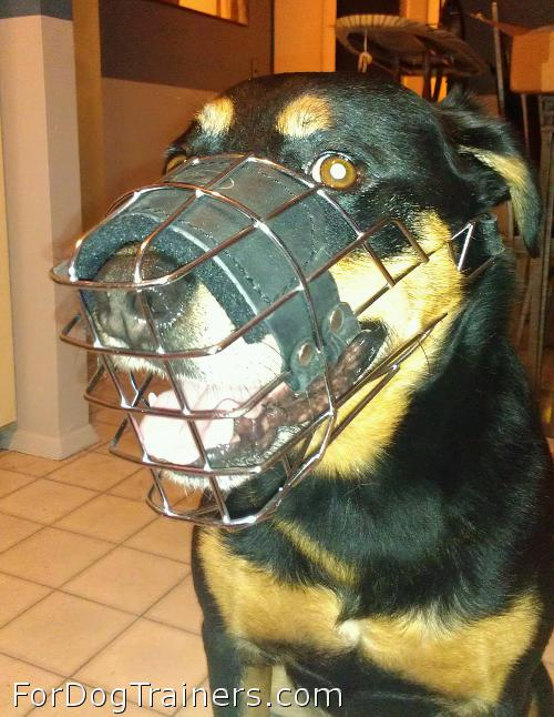 Excellent look in new muzzle