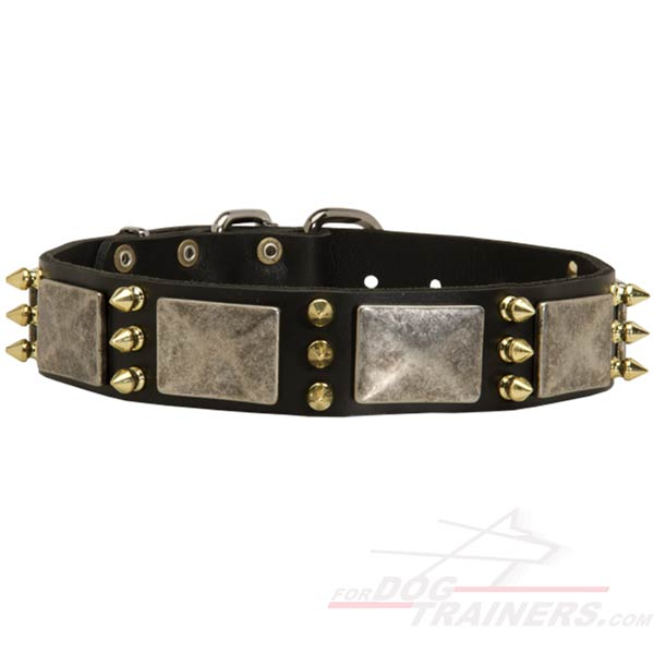 Gorgeous Leather Cane Corso Collar with Spikes and Plates