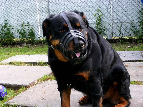 Everyday Light Weight Super Ventilation Rottweiler muzzle - product code M41_1 - Click Image to Close
