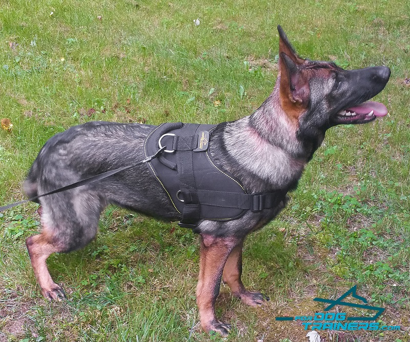 Multifunctional German Shepherd Harness Nylon for Talli H6_LRG buy german shepherd strong dog harness with control handle h6