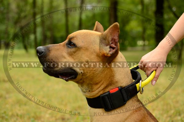 Nylon Dog Collar with handle