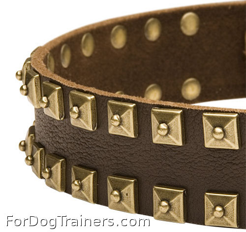 Best dog collar ever