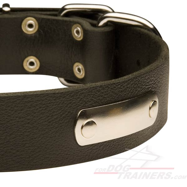 Excellent Leather Pitbull Collar