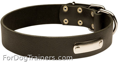 dog collar with ID