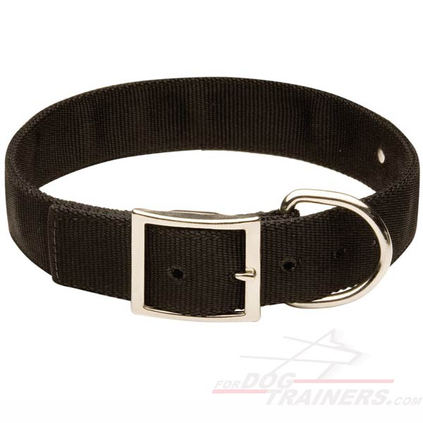 2 Ply Nylon Dog Collar with name tag