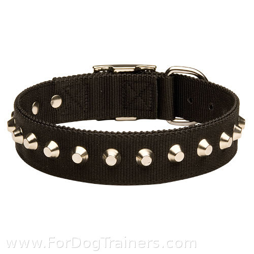 Studded nylon dog