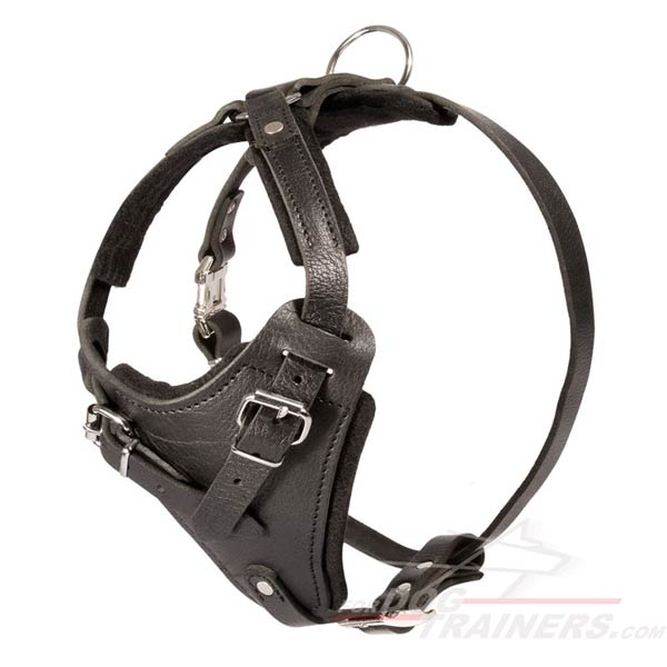 Absolutely Safe Leather Canine Harness for Agitation Work