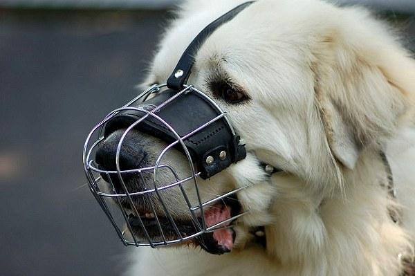 Dog Nose Leash