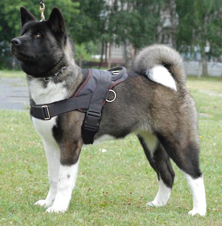 Nylon Multi Purpose Dog Harness For Tracking H6 1073