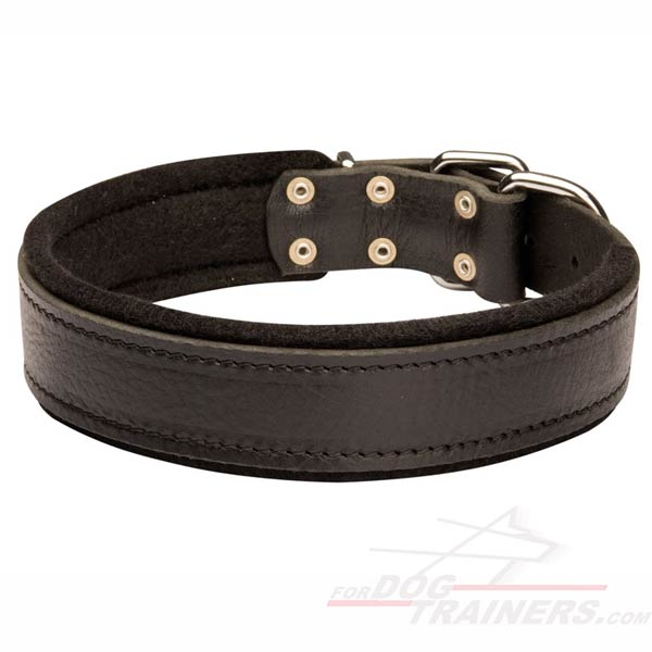 Padded Dog Collar Leather for German Shepherd