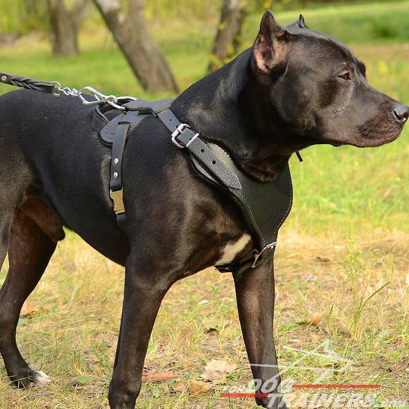 Adjustable Leather Pitbull Harness for Heavy Duty Work - Click Image to Close