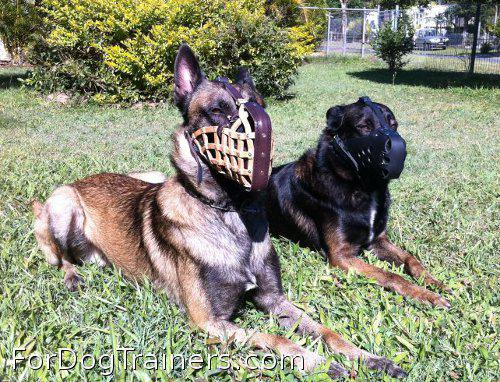 This dog deserved gorgeous police service muzzle