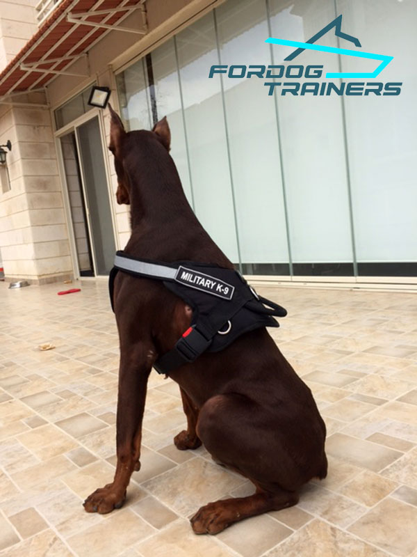 *Doi Doberman in Military Working Dog Harness - Click Image to Close