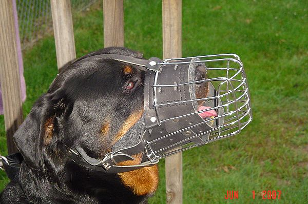 Basket wire dog muzzle perfect for Rottie - M90 - Click Image to Close