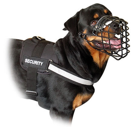 All Weather Harness for Rottweiler