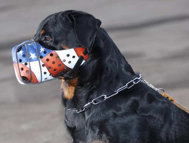 How to Measure Your Dog-click