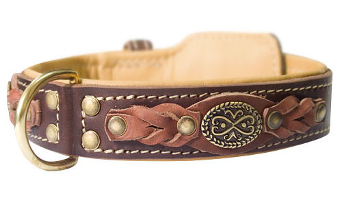 Royal leather padded dog collar, brown