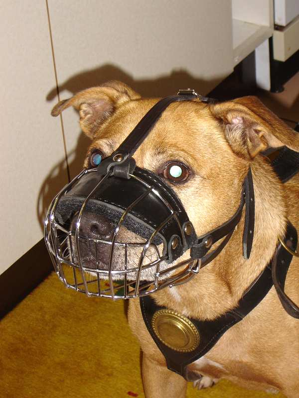 Lightweight Wire Basket Dog Muzzle for Pitbull Comfortable Training - Click Image to Close