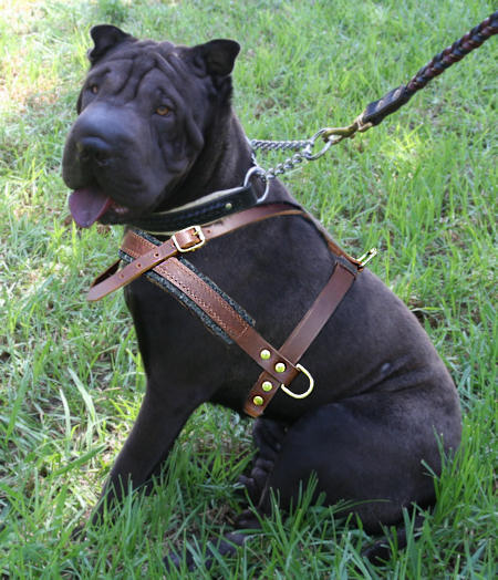 Sharpei Pulling/Tracking Leather Dog Harness-Shar pei harness