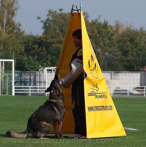 Schutzhund training