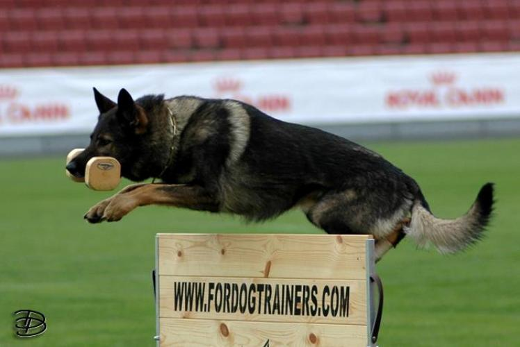 New schutzhund