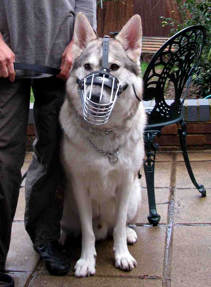 Order Adjustable Wire Cage Dog Muzzle
