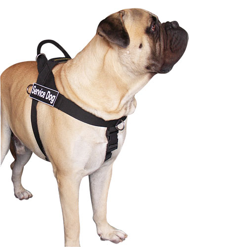 bullmastiff better control dog harness