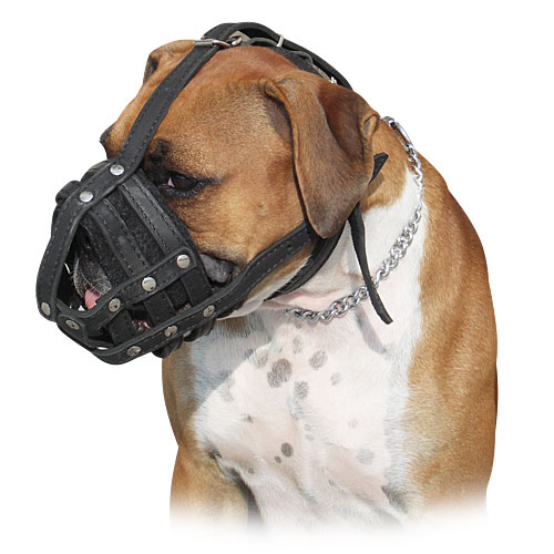 Boxer dog muzzle - leather boxer dog muzzle - M41