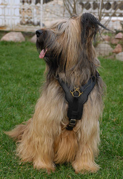 Exclusive Luxury Handcrafted Padded Leather Dog Harness Briard