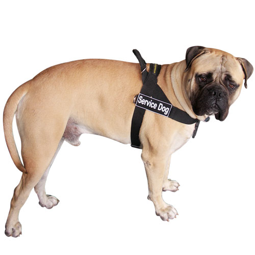 bullmastiff dog harness - h17