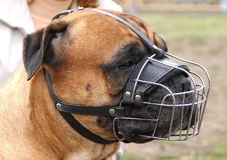 Wire Dog Muzzle Basket for Convenient Wearing while Walking or Training - Click Image to Close