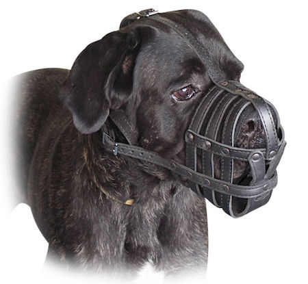 Cane Corso Everyday Light Weight Super Ventilation dog muzzle