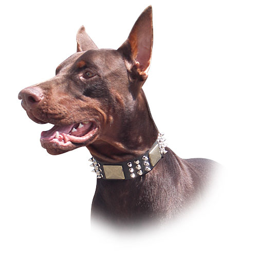 Doberman Dog Leather Collar - C86 (old brass massive plates +6 nickel spikes + 3 pyramids)40% DISCOUNT