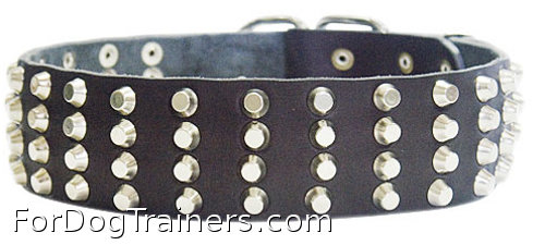 wide dog collar with 4 rows of pyramids/studds