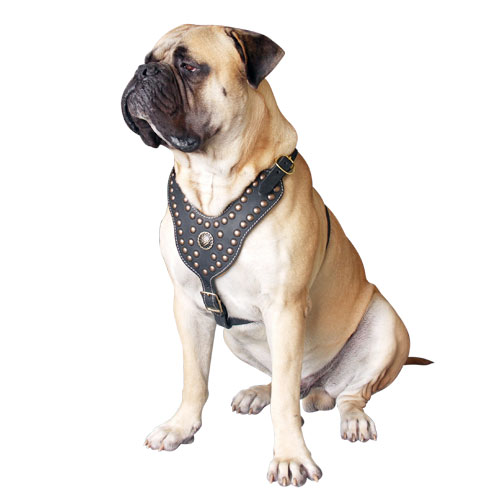 Royal Dog Harness for Bullmastiff - Exclusive Design Studded Leather Harness - Click Image to Close
