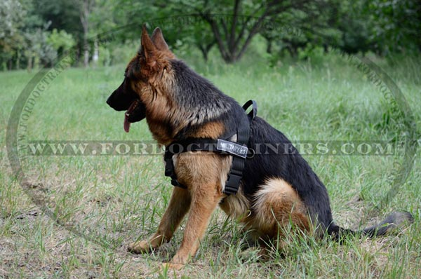Best Search and Rescue Nylon Harness for Large and Medium Size Dogs