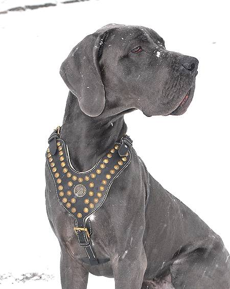 Royal Dog Harness - Exclusive Design Studded Leather Harness - Click Image to Close